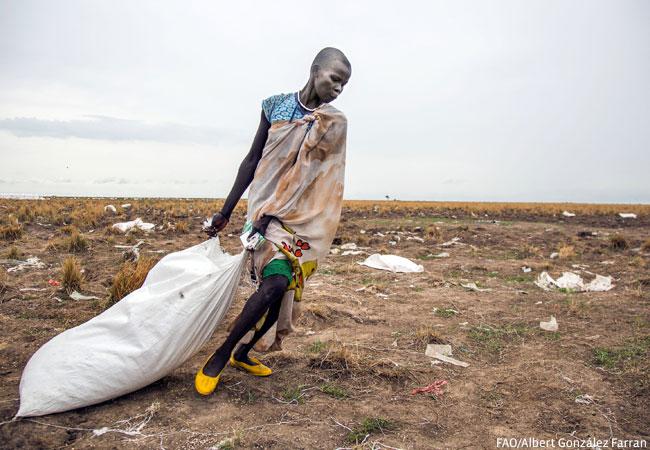 A woman pulls a sack of food distributed by WFP in Ganyiel, Unity region, South Sudan. (Credit: FAO/Albert González Farran)